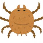 家の中に虫が突然発生する原因は?小さな子供がいる家の駆除・対処方法は?