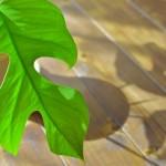 観葉植物の水やりはお湯であげでも大丈夫?「水・お湯」どちらが正しいのか説明するよ!